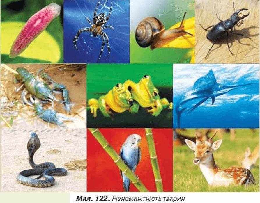 Тварин як і рослини тварини