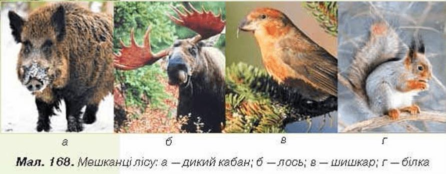 Розгляньте тварин лісу на