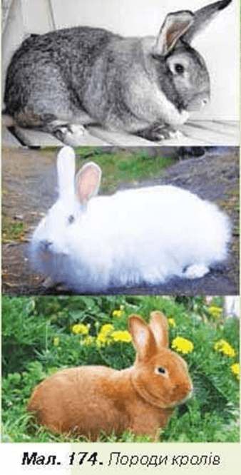 Зв язок людини природи картинки