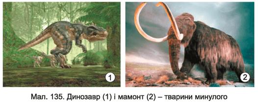 Тварини різноманітність тварин