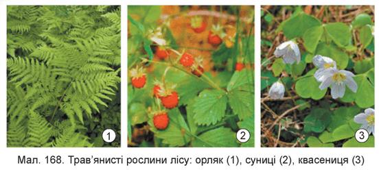 Атлас визначник рослин  тварин вкпедя