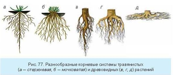 кактусов достигают глубины