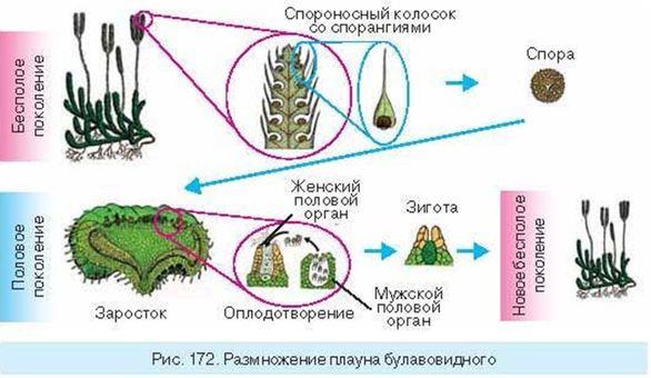 gruppovoy-seks-ulitsa