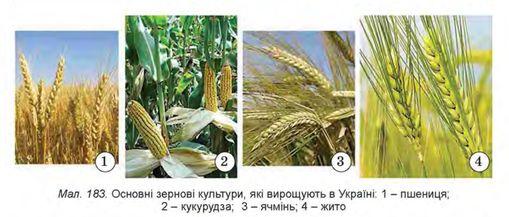Вирощування зернових сільськогосподарських культур в Томилино,Горячегорске,Первоуральске