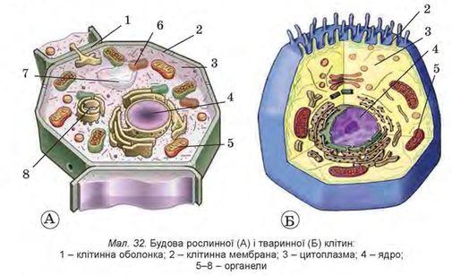 рослин (А - схема,