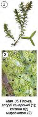 знакомство с клетками растений 5 класс биология