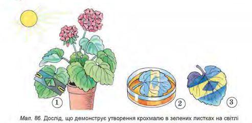 урок рослина живий організм біологія 6 клас
