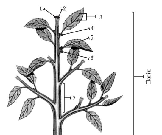 Органи багатоклітинних рослин