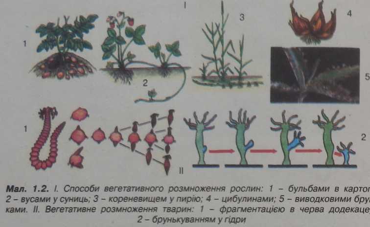 Способи вегетативного розмноження рослин
