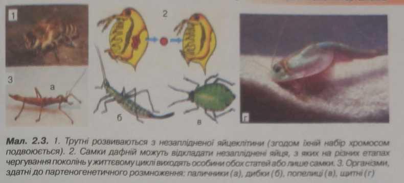 суть партеногенезу