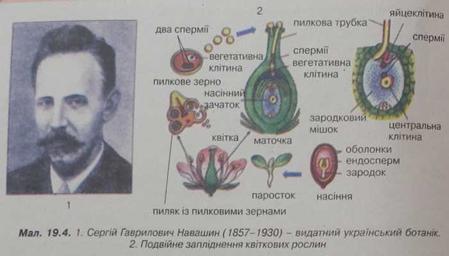 Сергій Гаврилович Навашин - видатний український ботанік. Подвійне запліднення квіткових рослин
