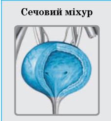 сечовий міхур