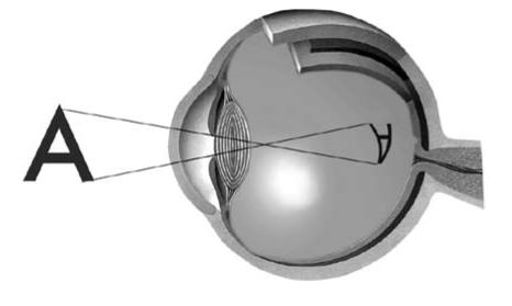 Схема утворення зображення на сітківці