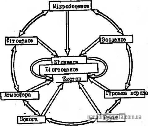 Схема взаємозв'язків структурних елементів біогеоценозу