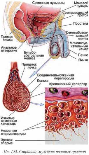 zhenskaya-sperma-snaruzhi-erotika-huk-onlayn