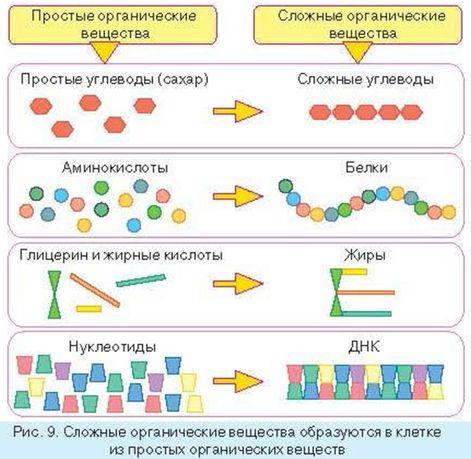 Сборочный конвейер в клетке это транспортеры цепные роликовые