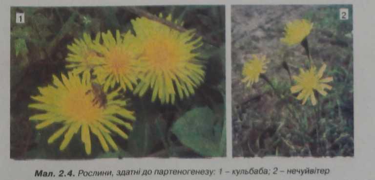 Рослини, здатні до партеногенезу