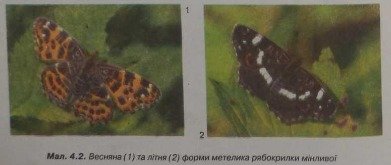 форми метелика